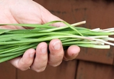 groomed garlic chives